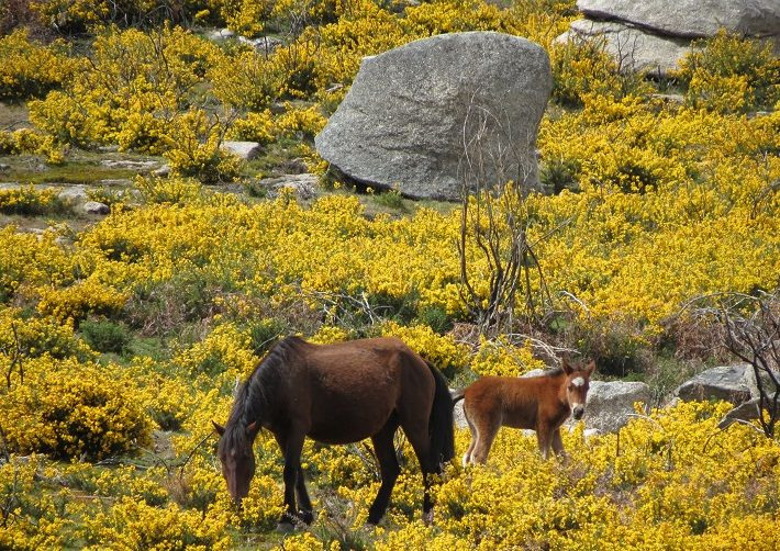 Serra D´Arga nature and wildlife