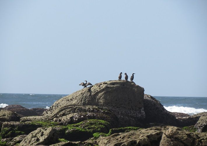 Portuguese Coastal Way to Santiago de Compostela, Spain. Camino de Santiago. From Viana do Castelo to Caminha on foot, walking or on a bike cycling